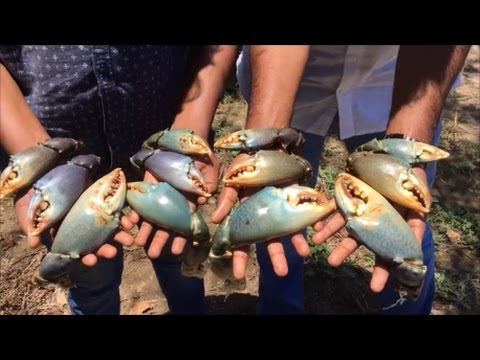 Cooking Big Claws - Spicy and Tasty Gravy - Big Claws Gravy - Crab Claws Masala