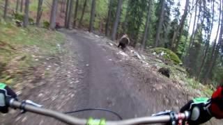 Bear on the Bikepark // SLOW MOTION  // Malino Brdo SLOVAKIA | Kholo.pk