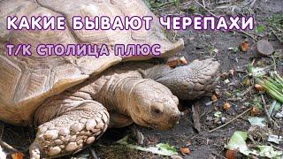 Передача про черепах