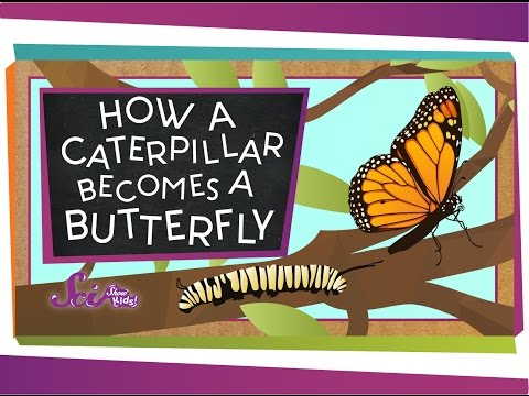 How A Butterfly Becomes A Butterfly