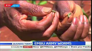 Business Today - 14th December 2017 - Embu farmers fight army worms