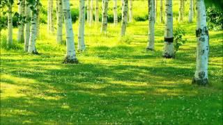 癒しの音森を吹き抜ける風と鳥のさえずり
