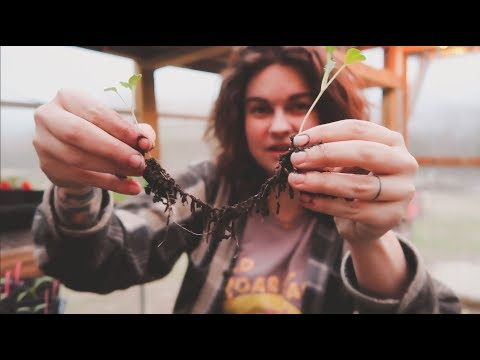 How to Separate Seedlings & Plant Starts | Gardening Tips | Roots and Refuge Farm