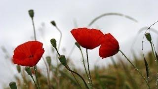 ☆ Červenám - Iveta bartošová, Petr Sepéši