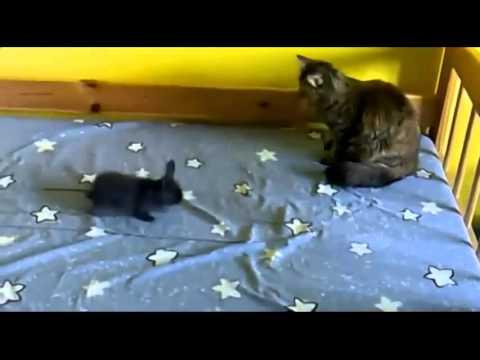 Beim Kater die Würmer was, dem Kind zu machen