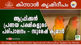 Feature on rearing of African love birds by Suresh Kumar, Trivandrum