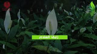 مجموعة من النباتات يمكن ...
