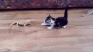 Animals Funny Video - A Funny Animal Videos Compilation 2016