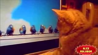 Смешные Сумашедшие Прикольные КОТЫ. Приколы Котов