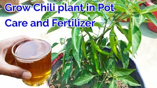 Grow Chili plant in pot,care and Fertilizer for Chili plant/how to grow Chili plant at home