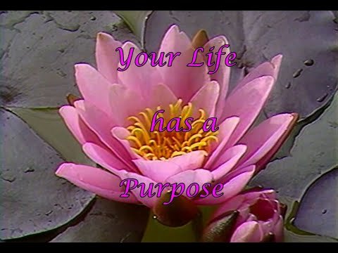 Your Life has a Purpose