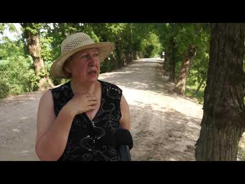Rudbāržu liepu aleja sliktā stāvoklī