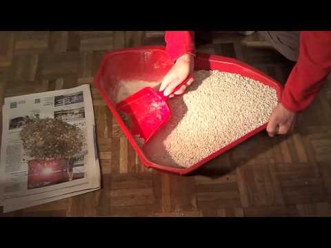 Limpiar caja de gatos - Caja de arena