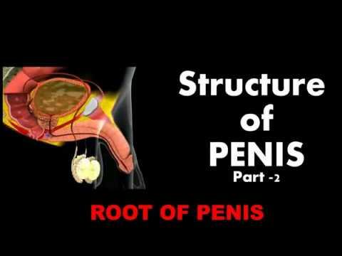 Empfehlungen für die Behandlung von akuten Prostatitis