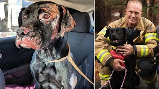 Her Owners Abandoned Her At Vet To Be Euthanized. Now She's Found A Forever Home— With A Firefighter