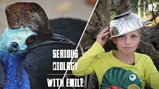 Cassowaries in Australia, dangerous and endangered - Serious Biology for Kids #2