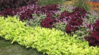 Garden Landscape - How to Design a Garden - YouTube