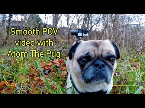 How To Get SMOOTH POV Video On A Dog! GoPro Tip #583