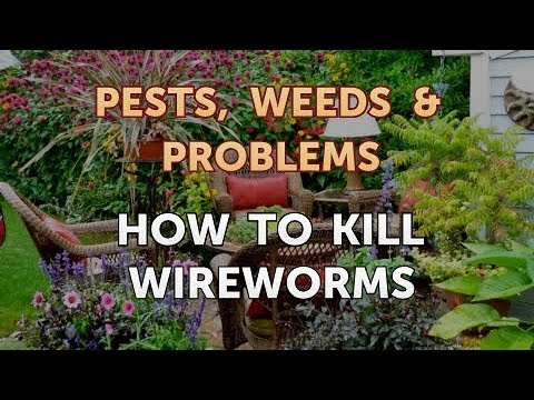 , title : 'How to Kill Wireworms