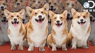 No, Cloning Your Dog Won't Bring Them Back
