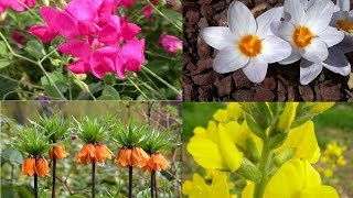 Only in Turkey: 16 endemic plant species.