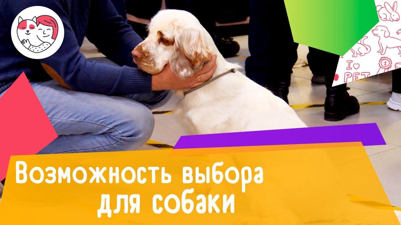 4 важных повода давать собаке выбор