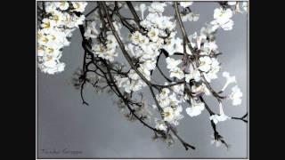Kevin Kendle Flowers Daffodils - Album Flowers-HD