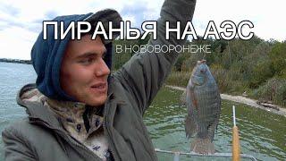 Где клюет рыба в удомле на