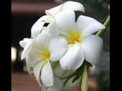 Цветок мужское счастье купить в интернет магазине