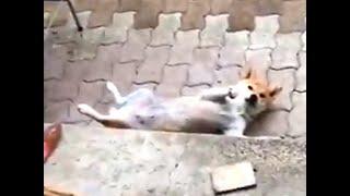 「柴犬が死ん…」近隣の方、大丈夫です