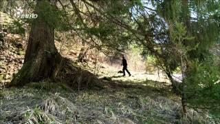 山貓要回家 (HD)