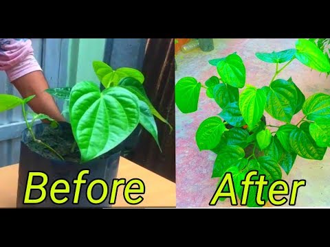How to use npk fretilizer your plants!!!