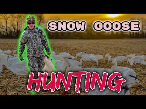 snow-goose-hunting-a-huge-flock-of-geese