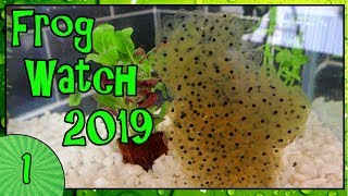 FROG WATCH 2019 - Collecting Frogspawn and Setting Up The Tank [1]