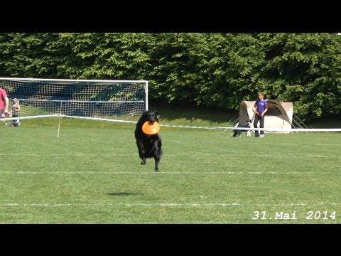 Hundefrisbee WM Qualifikation in Ippinghausen am 31. 5. 2014 v  tubehorst1