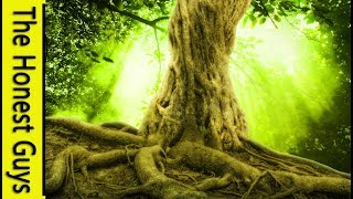 GUIDED SLEEP TALK-DOWN: The Strength of The Earth (Grounding & Anxiety Relief)