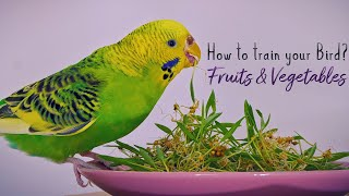 How to get your Parrot to eat Vegetables & Fruits? Simple and Fun