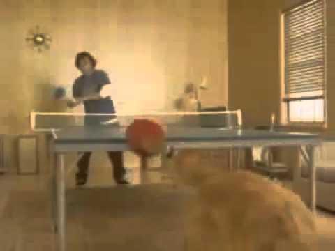 Chó đánh bóng bàn bá đạo trên từng hạt gạo