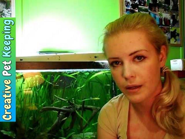 FAQ about keeping betta fish in a community tank