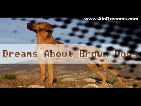 #16 Interpretation of a brown dog dream