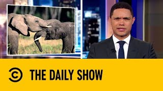 Humans Driving One Million Species Into Mass Extinction | The Daily Show with Trevor Noah
