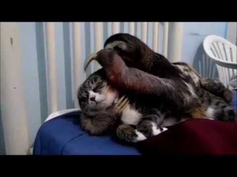 When a Sloth Loves a Cat...
