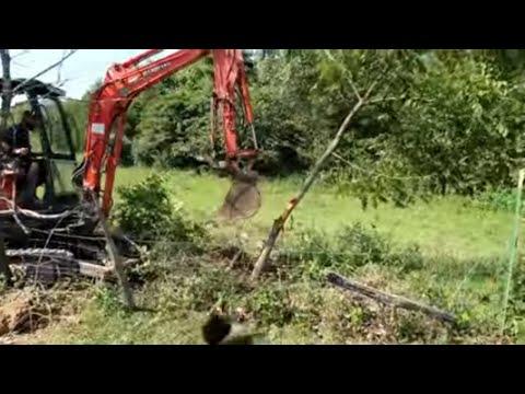 Mini Excavator Vs. Tree - Preparing To Dig A Duck Pond Resort
