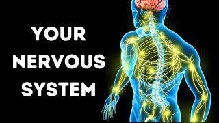 A Journey Through Your Nervous System