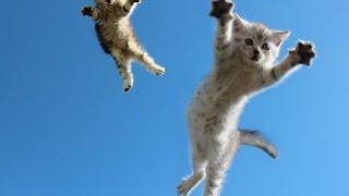 Смешные кошки :)  Часть 248 - Прыгуны:))