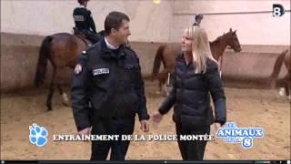 preview picture of video 'Brigade Équestre La Courneuve (93) Emission Les Animaux de la 8 (Direct 8) déc 2012'