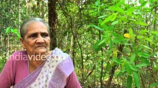 Thozhukanni - medicinal herb