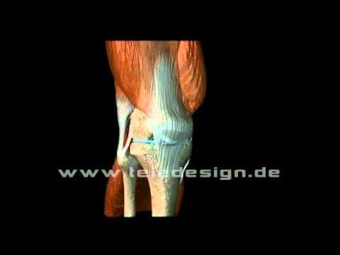 Dass, wenn der Unterleib und den unteren Rücken zieht verletzt