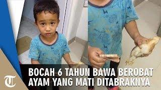 Tak Sengaja Tabrak Anak Ayam, Bocah Ini Membawanya ke Rumah Sakit dengan Uang Rp2000