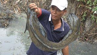MÈO ĐEN ĂN GIAN - bắt cá nhà Lá